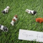 Cow-Series-Grass-Fed, 2015 Mieko Meguro